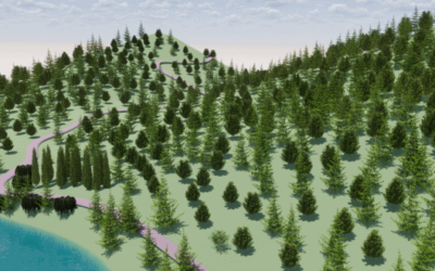 How to model a forest?