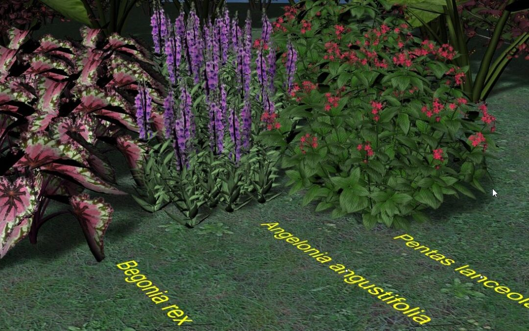 Best summer flowers for your landscape